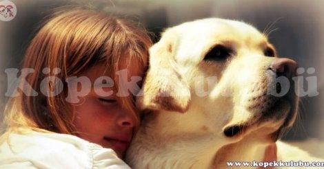 Köpek Kulübü Türkiye'nin yavru köpek üretimi satışı merkezi
