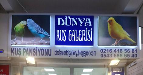 Dünya Kuş Galerisi