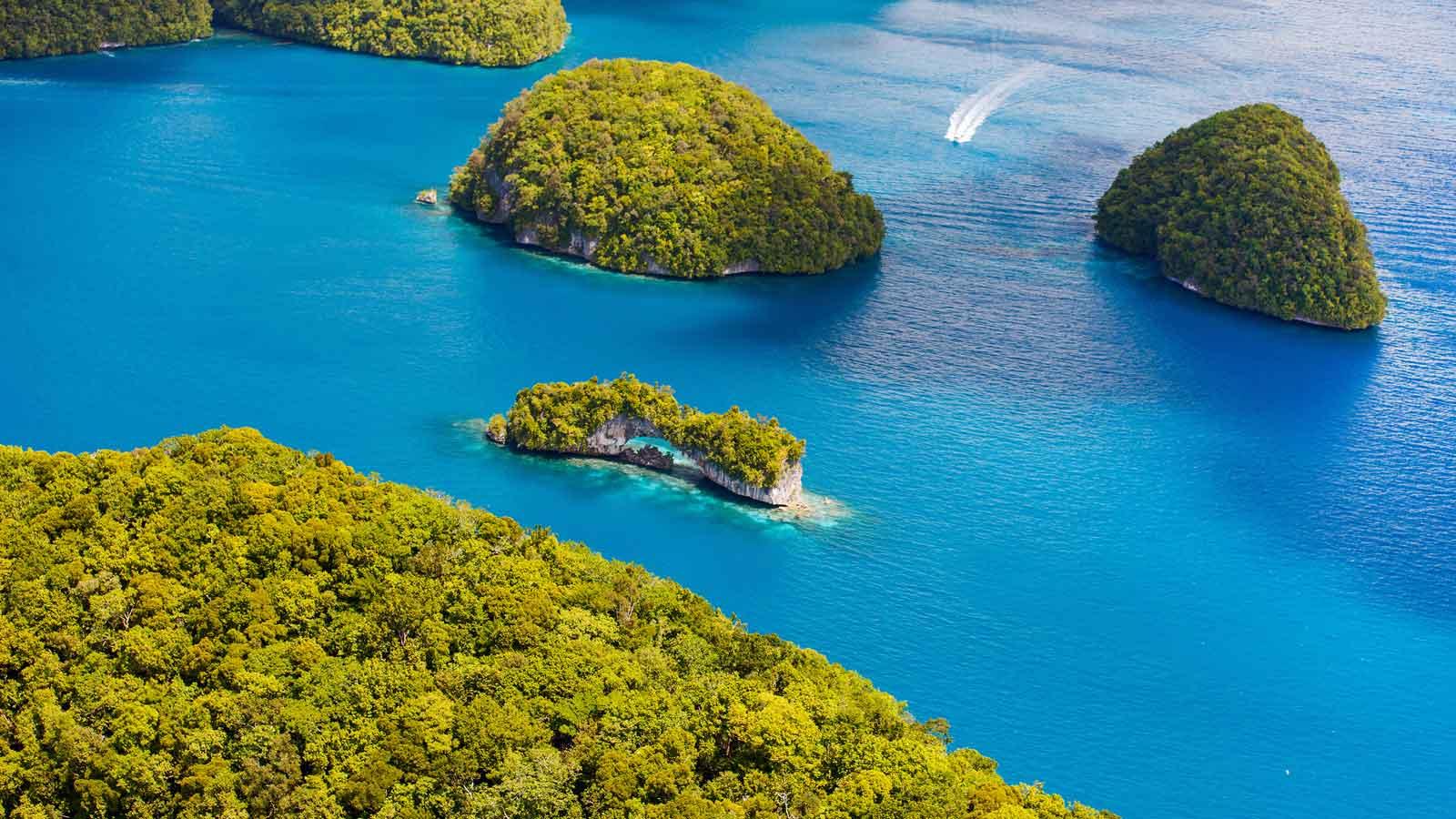 Mikronezya'daki Türk Firmaları