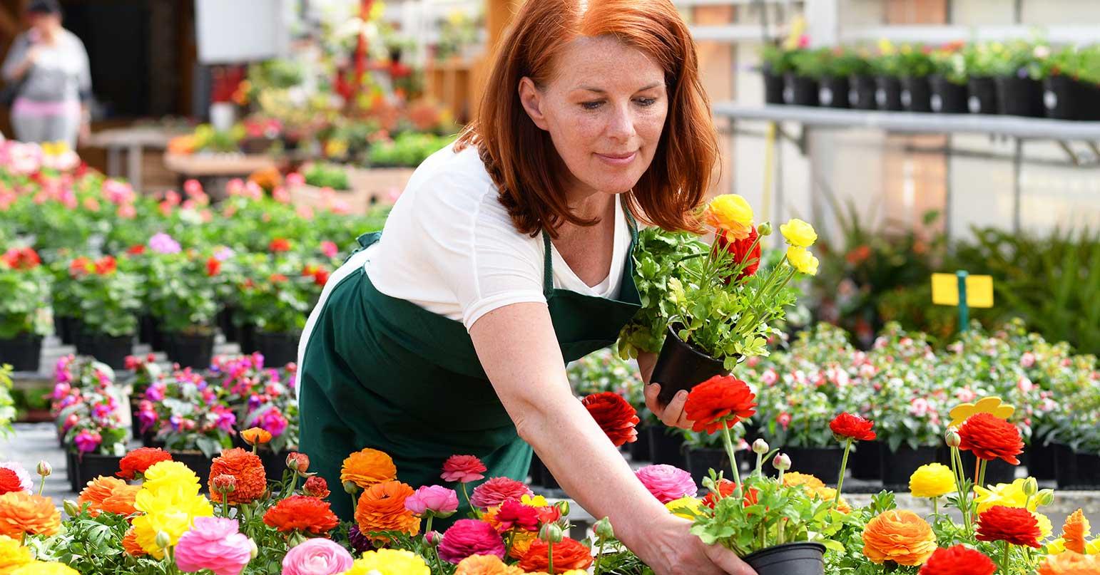 Çiçekçiler - Çiçek Siparişi Firmaları